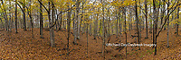 63895-14308 Trees in fall at Stephen A. Forbes State Park, Marion Co., IL