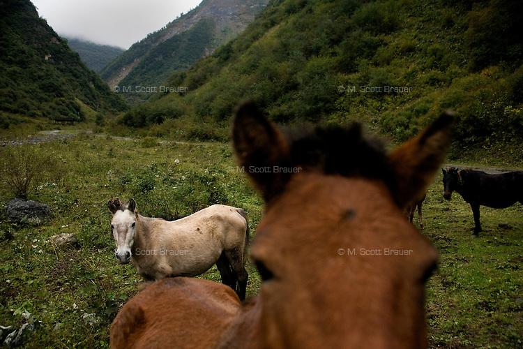 Tibetan horses gather in a grassy valley outside Bai Ma Tibetan Ethnic Village, Sichuan, China.