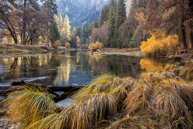The golden colors of autumn accent this peaceful scene along the Merced River as it gently flows through Yosemite Valley.