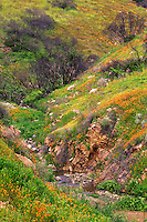 Spring wildflowers near Lake Elsinore, California