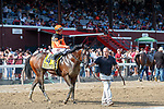 Imperial Hint (no. 4) wins the Alfred G. Vanderbilt Handicap July 28 at Saratoga Race Course, Saratoga Springs, NY.    Ridden by Javier Castellano and trained by Luis Carvajal, Imperial Hint finished 3 3/4 lengths in front of Warrior's Club (no. 3) in the 6 furlong race.  (Bruce Dudek/Eclipse Sportswire)