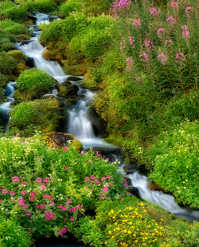 Small unamed stream with summer wildflowers. Mt. Rainier National Park, Washington