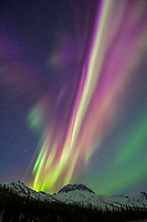 Colorful northern lights over spruce trees in the Brooks Range mountains in Alaska's Arctic.