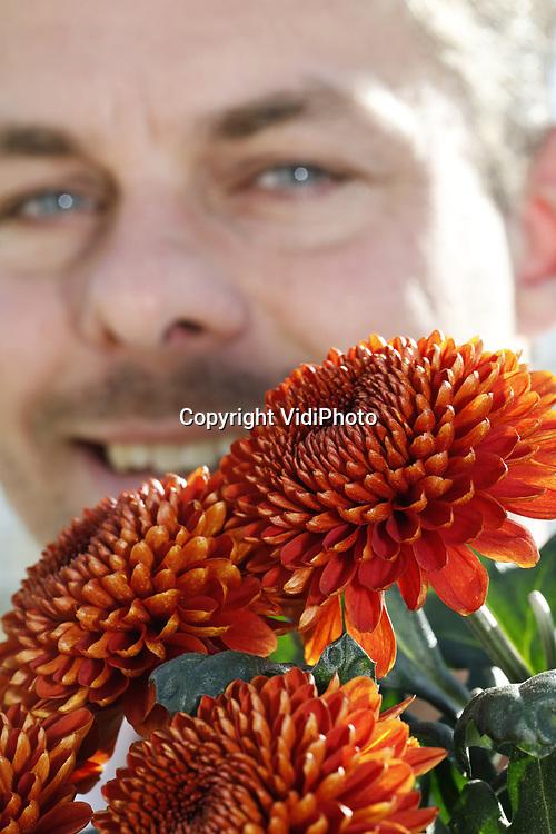 Foto: VidiPhoto<br /> <br /> TUIL &ndash; Hoewel minder uitbundig dan zijn pluizige soortgenoten, is de Paladov Dark een echte topper. Met name in de herfst. De donker-oranje chrysant bezit de warme uitstraling waar consumenten in de aanloop richting winter naar op zoek zijn. De relatief nieuwe snijbloem -&ldquo;vorig jaar zijn we er mee begonnen&rdquo;- is voor teler Lewis Flowers in het Gelderse Tuil dan ook het bijna duurste product dat zijn 8 ha. grote kassencomplex verlaat, vertelt eigenaar Yorick Leeuwis. Zo&rsquo;n 25.000 stelen rollen er tussen begin oktober tot en met december wekelijks over de lopende band en vinden via de diverse bloemveilingen hun weg naar de consument. Opmerkelijk genoeg is de Paladov in vrijwel alle Europese landen populair, waaronder ook in Nederland. Overigens is de Paladov jaarrond verkrijgbaar, maar is de &lsquo;darkversie&rsquo; vooral veelgevraagd in het najaar. Wat gewicht betreft moet de Paladov het duidelijk afleggen tegen de robuuste andere soorten, ook daarom voelt de ranke en ietwat mysterieus ogende chrysant zich vooral thuis in sierboeketten. Om de bloem nog meer uitstraling te geven worden de stelen op water geveild.