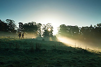A misty dawn, Linn Park, Glasgow