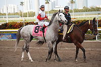 Hit It Rich with Javier Castellano up on post parade for the Orchid Stakes (G3T). Gulfstream Park Hallandale Beach Florida. 03-31-2012. Arron Haggart / Eclipse Sportswire