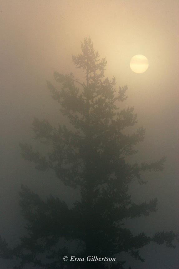 Morning sun thru mist on top of the Ridgeline trail