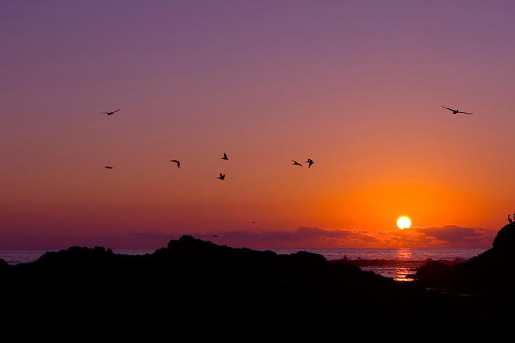 Pelicans flying during a September sunset over Pescadero State Beach,  Pescadero, California