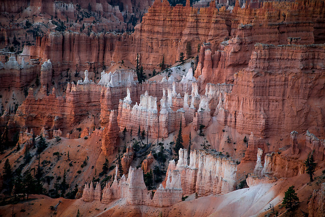 The hoodoos are the predominate sandstone feature at Bryce Canyon National Park, Utah
