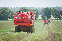 Pea vining with PMC harvesters - Norfolk, July