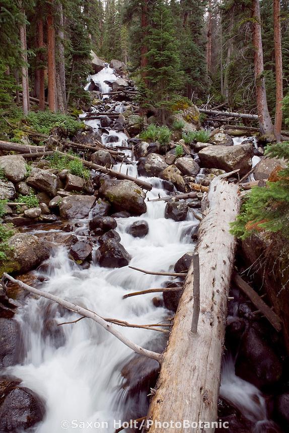 Calypso waterfall creek (stream) on Thunder Lake Trail Rocky Mountain National Park Colorado