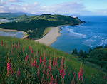 Tillamook County, OR<br /> Hillside of foxglove (Digitalis pururea) blooming on Cascade Head above the mouth of the Salmon River and the Oregon coast headlands