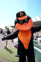 Baltimore Orioles mascot, The Oriole Bird, before a Spring Training game against the Tampa Bay Rays on March 14, 2015 at Ed Smith Stadium in Sarasota, Florida.  Tampa Bay defeated Baltimore 3-2.  (Mike Janes/Four Seam Images)