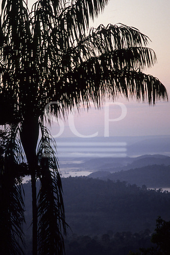Para State, Brazil. Dawn view over the rainforest with palm tree in silhouette in the foreground; Serra dos Carajas.