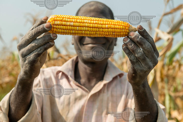 A man proudly shows a cob of maize from the latest harvest.