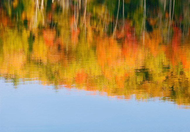 The shore of Red Jack Lake in the Hiwawatha National Forest is ablaze with color in the early morning light in autumn, Alger County, Michigan.  By taking out the visual reference of the actual shoreline and showing only the reflection, an abstract view is crreated.