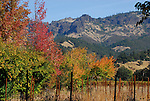 autumn in Calistoga area