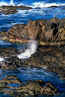 769550195 a lone sea gull larus occidentalis perches on sea stacks with waves breaking on the rocks and beach along the pacific ocean at strawberry hill state beach on the oregon coast