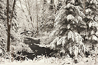 A creek running through a snowy northern Wisconsin woodland.