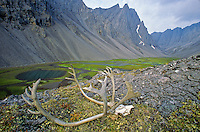 Caribou skull on tundra in unnamed valley amid rugged peaks of the Endicott Mountains in the Brooks Range at Gates of Arctic National Park, Alaska, TomBean_Pix_0733.