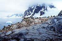 Penguin Antartica