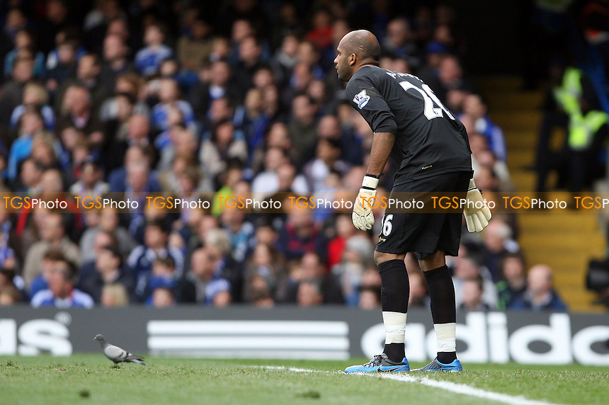 A pigeon in the penalty area - Chelsea vs Wigan Athletic - Barclays Premier League at Stamford Bridge, Chelsea - 07/04/12 - MANDATORY CREDIT: Rob Newell/TGSPHOTO - Self billing applies where appropriate - 0845 094 6026 - contact@tgsphoto.co.uk - NO UNPAID USE..