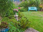Vashon-Maury Island, WA: Bright blue bench in a cottage garden featuring bright pink geraniums, coleus, ferns, nasturtiums, evergreen azaleas