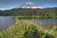 Natural Wildflower bouquet contributes the majestic venue that is Mt Rainier National Park.