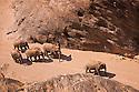 Namibia;  Namib Desert, Skeleton Coast,  desert elephants (Loxodonta africana) walking through canyon in dry river bed