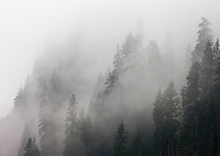 Fog Enveloping Cascade Mountain Range, Washington, USA.