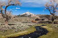 A pretty day at Buffalo Ranch.   The Lamar Buffalo Ranch was in operation from 1906 until the 1950s, was the center of efforts to increase the herd size of bison in Yellowstone. in 1901, Congress appropriated $15,000 to augment the depleted Yellowstone Bison herd by purchasing 21 bison from private owners. As part of the first effort to preserve a wild species through intensive management, these bison were fed and bred in Lamar Valley at what became known as the Buffalo Ranch.