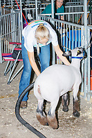 Abigail Dies, of Ames, Iowa, 15, gets her crossbred ewe lamb Caroline ready for the night after competing in the Intermediate 4-H Sheep Showmanship competition in the Sheep Barn at the Iowa State Fair in Des, Moines, Iowa, on Sun., Aug. 11, 2019. Dies ranked top 2 in her class and has been showing at the state fair since 5th grade. She had just washed the sheep and used an air blower to dry off the animal before putting a blanket on the sheep at the end of the day.