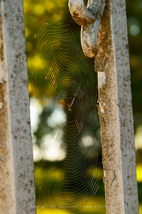 An old iron gate railings with a spider web cobweb - Chateau Carignan, Premieres Cotes de Bordeaux