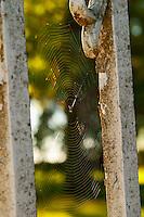 An old iron gate railings with a spider web cobweb - Chateau Carignan, Premieres Cotes de Bordeaux