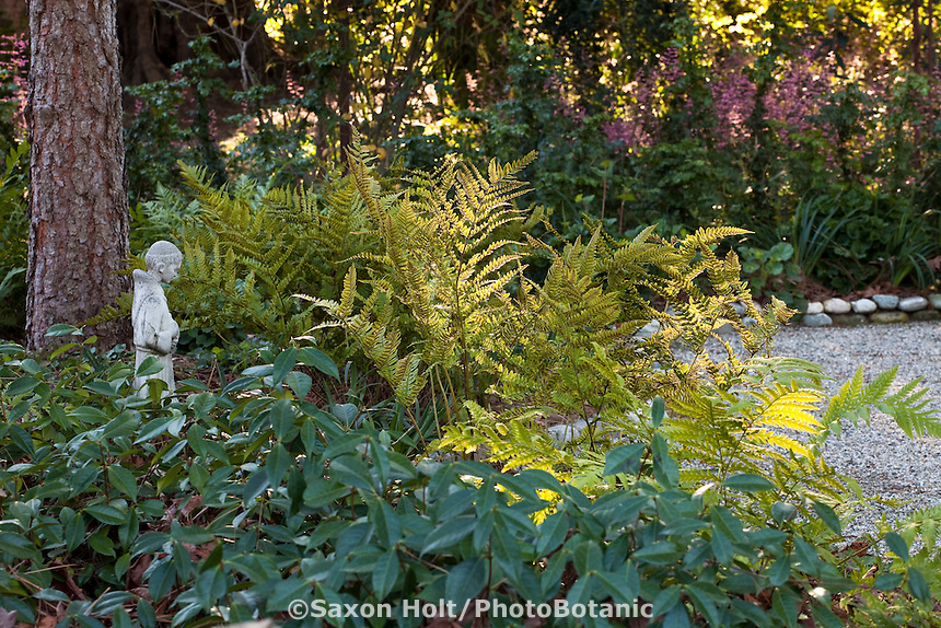 Sunlit ferns in shady Southern California with Coffeeberry (Rhamnus) and small statue, drought tolerant native plant garden