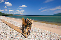 Driftwood along Cabot Trail<br /> Jersey Cove<br /> Nova Scotia<br /> Canada