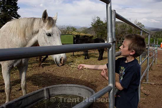 Noah Nelson feeding horses<br />