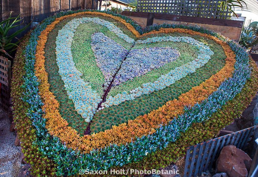 """A Living Heart Through Succulent Art"" - Designed by Robin Stockwell of Succulent Gardens"