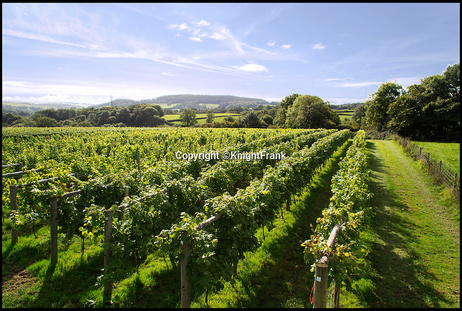 BNPS.co.uk (01202 558833)<br /> Pic: KnightFrank/BNPS<br /> <br /> The 23 acre vineyard.<br /> <br /> Wine lovers will want to snap up this beautiful property which comes with its own ready-made business - an award-winning vineyard.<br /> <br /> Southcote Farm, near Honiton in Devon, has an attractive farmhouse and a mixture of farmland as well as about 23 acres of vines in an area of outstanding natural beauty near the coast.<br /> <br /> Owners Nigel and Dawn Howard transformed the former stud farm to create the vineyeard from scratch, planting their first vines in 2010.<br /> <br /> The Southcote Vineyard plantings are 11,000 Bacchus, 6,000 Pinot Noir and 6,000 Seyval Blanc over 20 acres and the Watchcombe Vineyard is about three acres with 1,000 Pinot Noir and 2,000 Seyval Blanc.<br /> <br /> The 54-acre farm is on the market with Knight Frank for £1.95million.