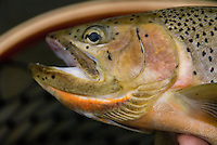 Fly fishing photos by Doug Wilson