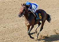 Mucho (no. 6) wns Race 7, Aug. 4, 2018 at the Saratoga Race Course, Saratoga Springs, NY.  Ridden by Jose Ortiz and trained by William Mott, Mucho finished 9 3/4 lengths in front of Fullness of Time (no. 1).  (Photo credit: Bruce Dudek/Eclipse Sportswire)