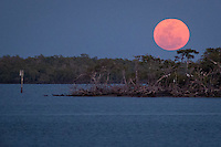 The biggest and brightest full moon in more than 18 years, also called the 'supermoon', rises over Addison Bay, Marco Island, Saturday, March 19, 2011. The moon was in its full phase, and at it's point of orbit that brings it close to Earth. Photo by Debi Pittman Wilkey