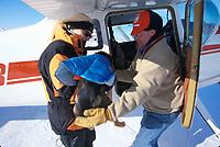 Pilot Loads Dropped Dog into Plane Galena 2000 Iditarod AK John Norris