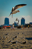 Seagull and family on beach at South Beach, Miami Beach, Florida.