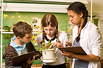 Education Grade 6 Public school boy and two girls doing plant observation in science class horizontal different heights horizontal