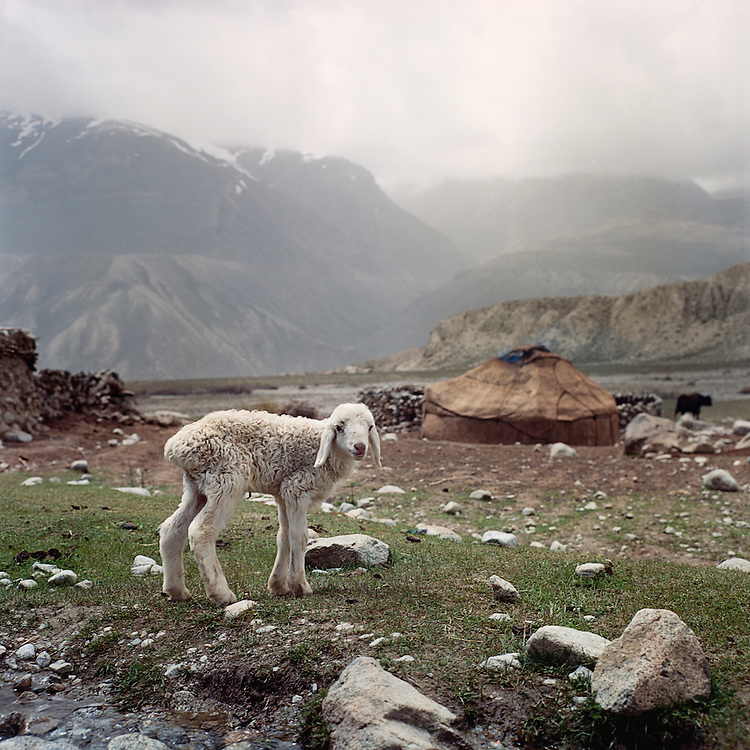 A lamb stands outside of the yurt of Wakhi shepherds in the Big Pamir Mountains in the Wakhan Corridor.