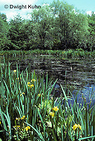 PO01-009b  Pond with water plants