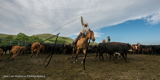 high handed Cowboys working and playing. Cowboy Cowboy Photo Cowboy, Cowboy and Cowgirl photographs of western ranches working with horses and cattle by western cowboy photographer Jess Lee. Photographing ranches big and small in Wyoming,Montana,Idaho,Oregon,Colorado,Nevada,Arizona,Utah,New Mexico.