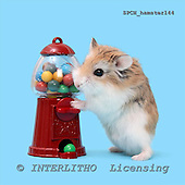 Xavier, ANIMALS, photos+++++,SPCHHAMSTER144,#a# ,funny
