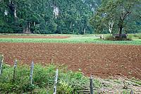 Cuba, Pinar del Rio Region, Valle de Viñales (Vinales) Area.  Farmer's Field.  Agricultural Scene.